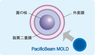 菌の核の細胞壁(外套膜)を破壊!
